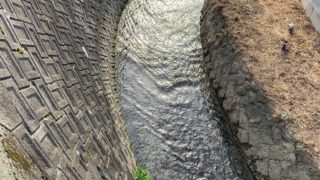 河床掘削要望の現地確認